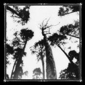 ancestorsblood-whentheforestcalls